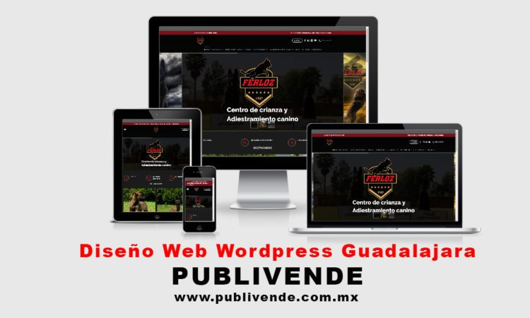 diseño web wordpress Guadalajara